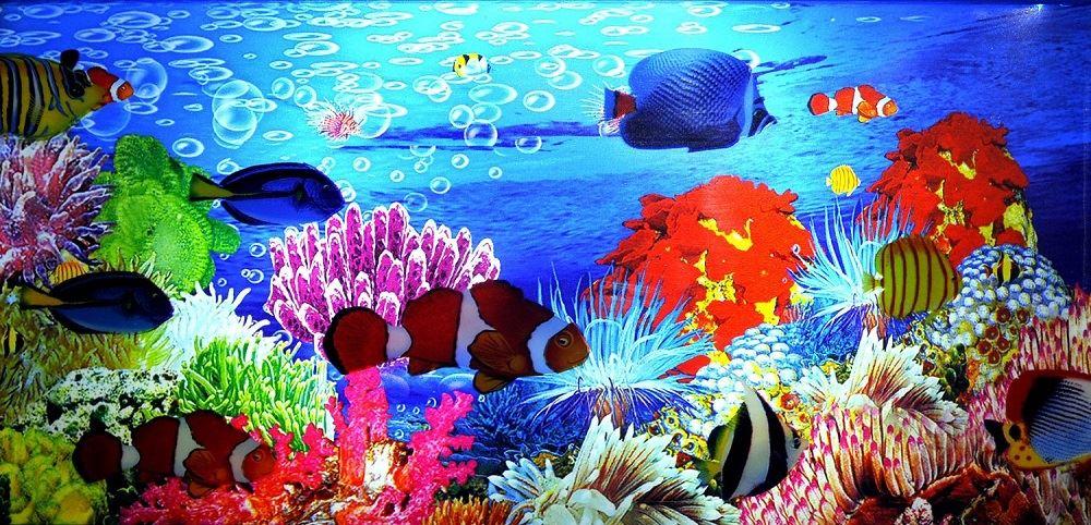 Living fish aquarium moving motion artificial tropical for Moving fish tank
