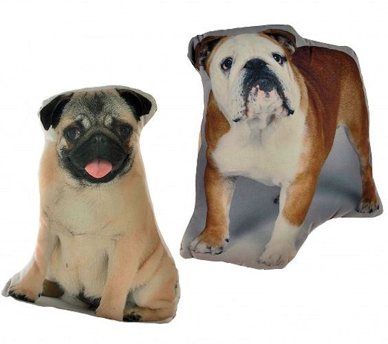 PUG BRITISH BULLDOG ANIMALS PETS
