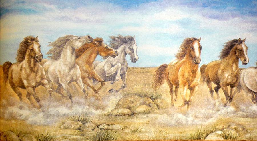 wilde pferde bord re kinder schlafzimmer 5m lang f r pony schafliebhaber neu. Black Bedroom Furniture Sets. Home Design Ideas