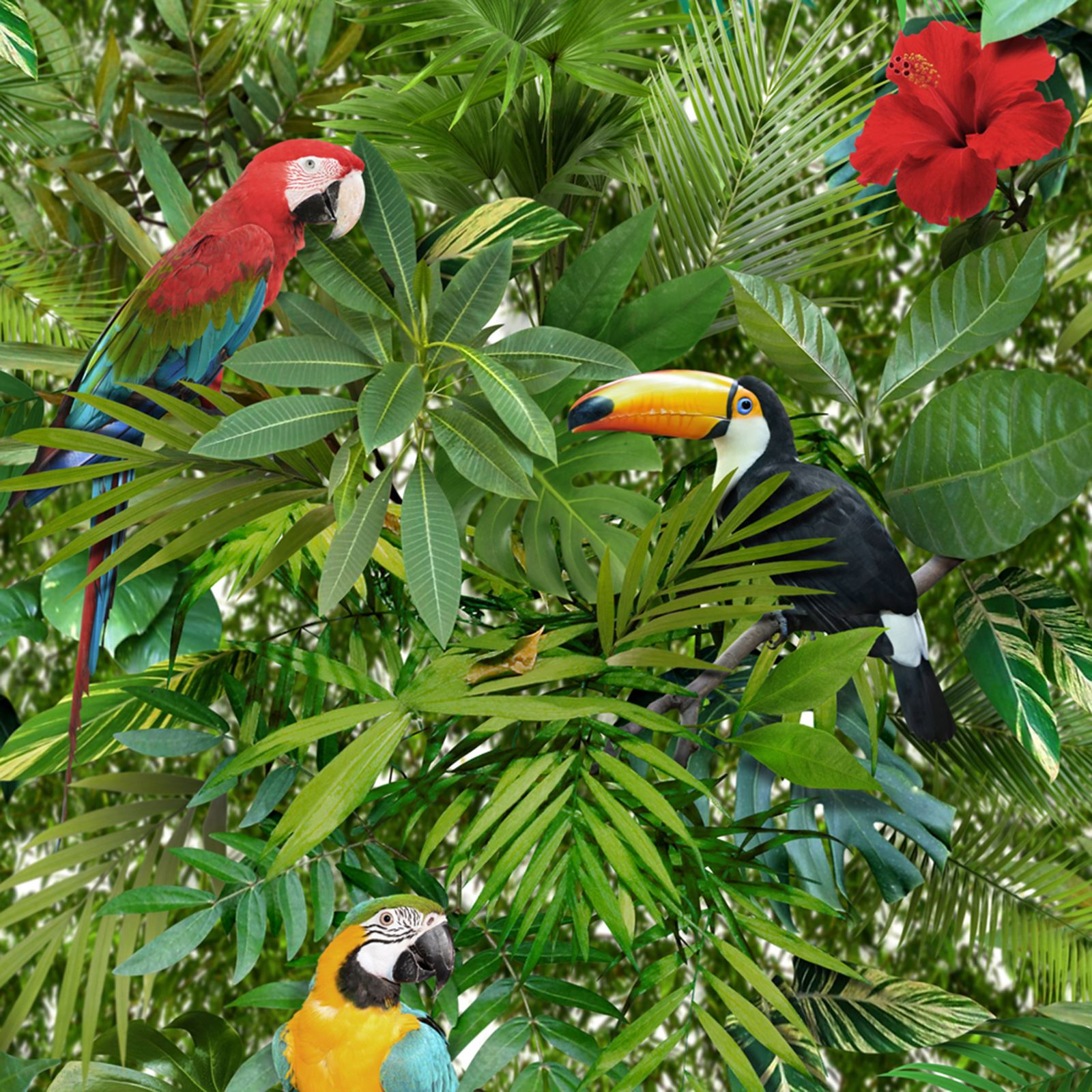 tropical bird wallpaper for walls - photo #1