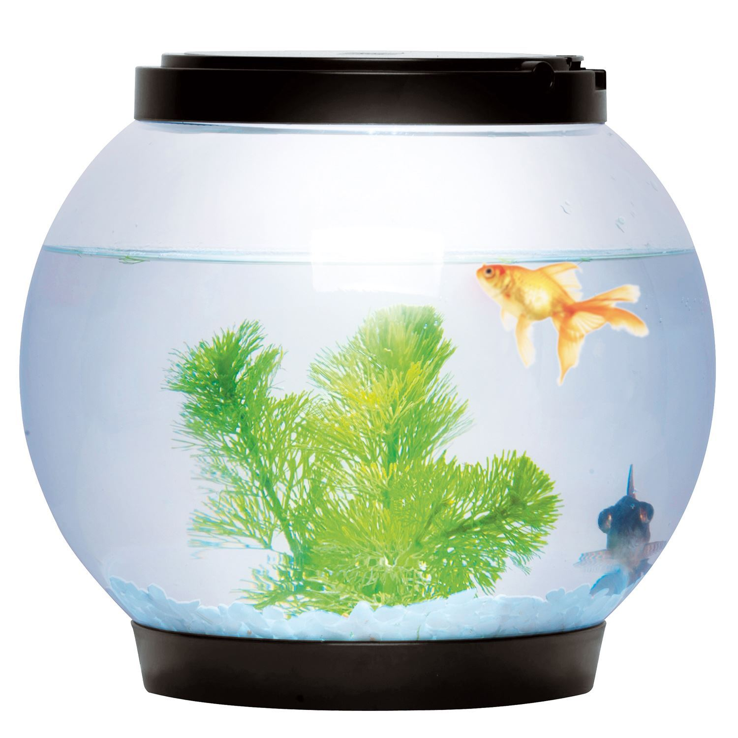 Round glass goldfish fish bowl tank with colour led light for Acrylic fish bowl
