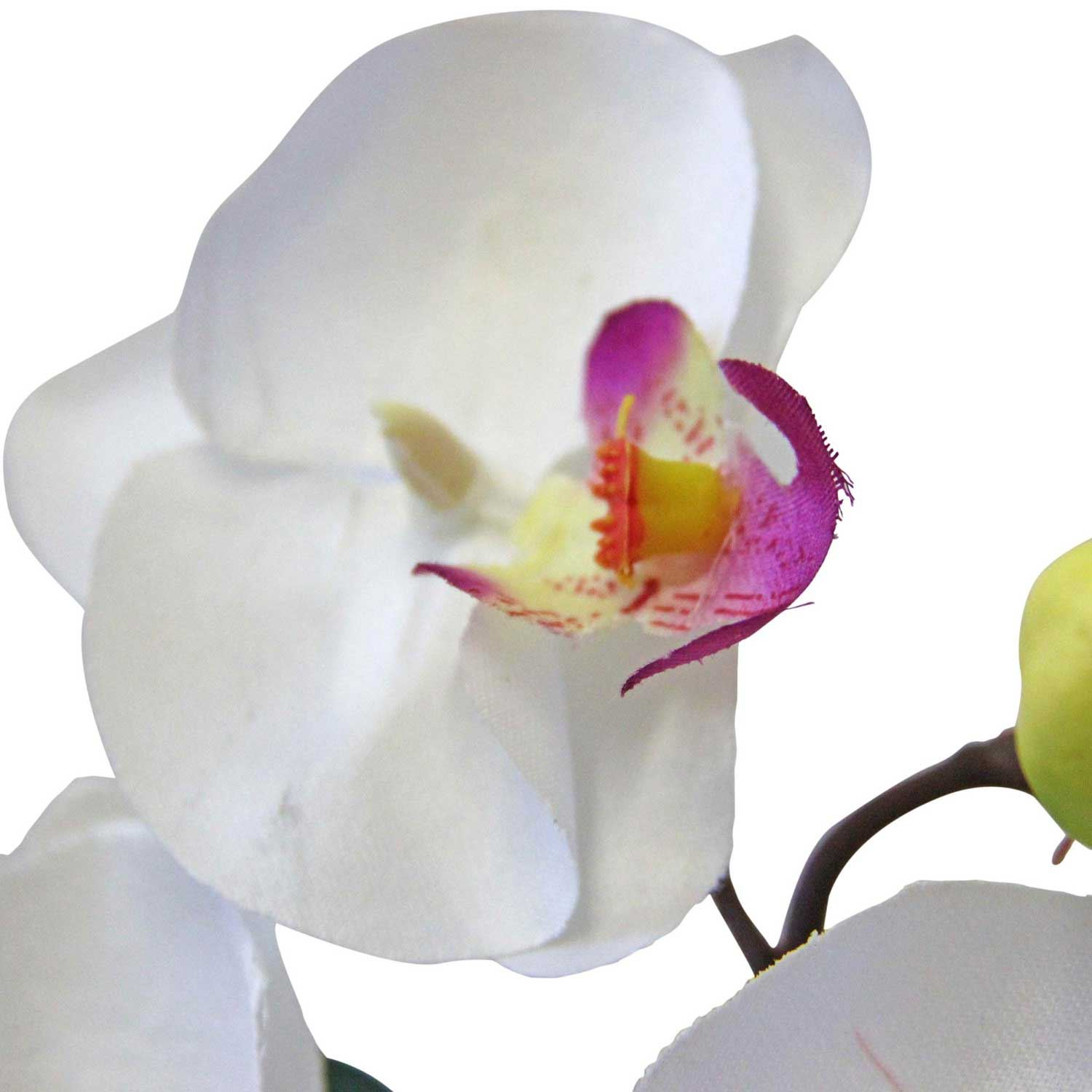 White Orchid Water Pink: Cerise Pink And White Mini Orchid Flowers For Indoor And