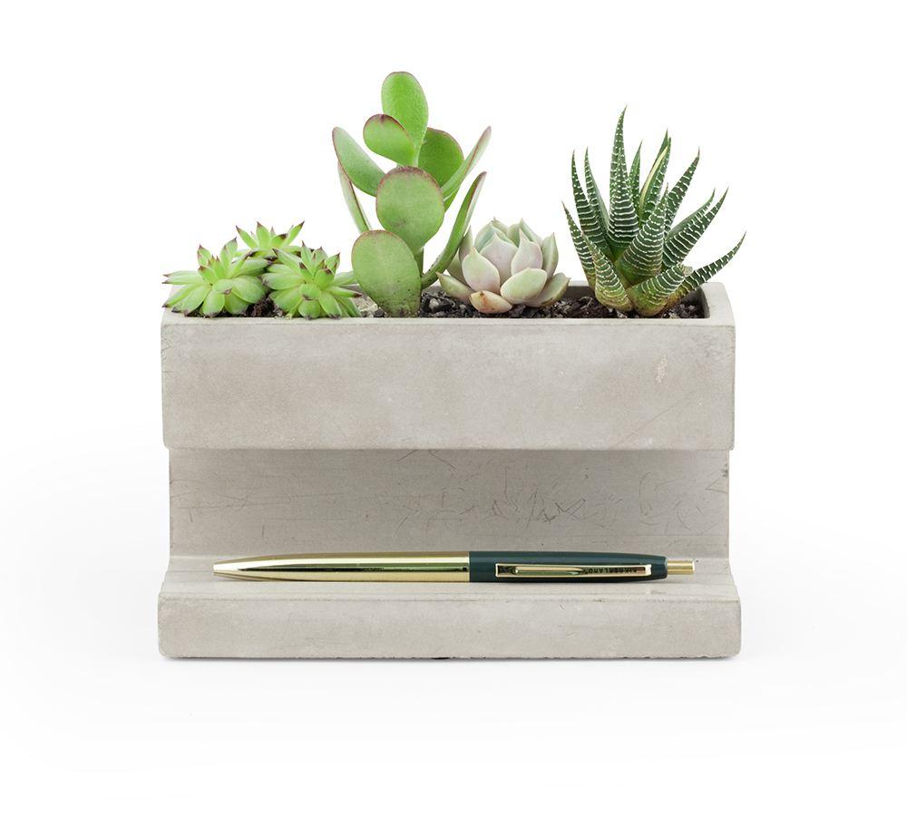 Kikkerland Concrete Planter And Pen Holder Green Plant