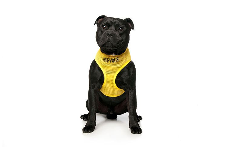 Warning Dog Collars Lead Leash Harness Vest Colour Coded
