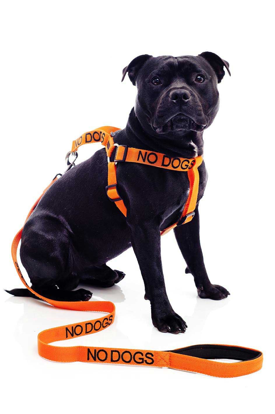 warning dog collars lead leash harness vest colour coded friendly deaf s m l ebay. Black Bedroom Furniture Sets. Home Design Ideas