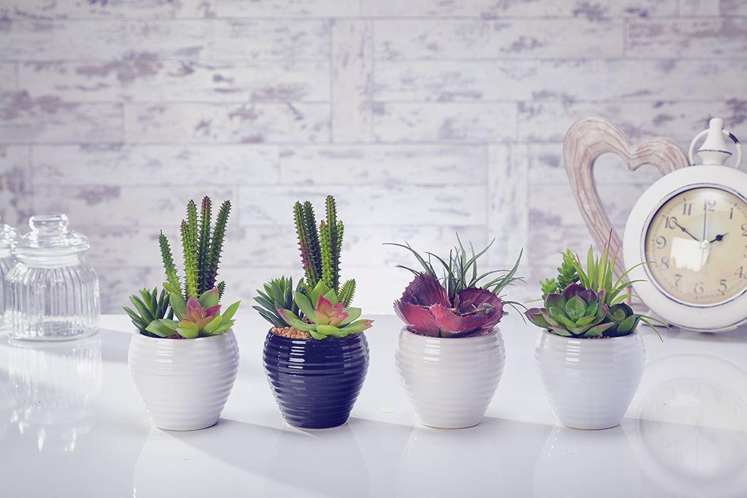 Artificial Cactus Flowers Plants In Pot Home Decor