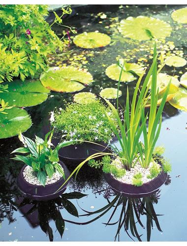 Velda floating pond plant island round 25cm diameter for Floating pond plants
