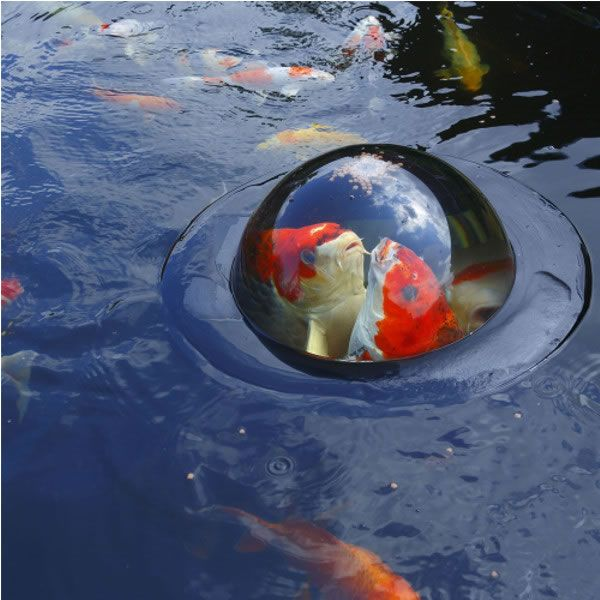 Velda floating dome large koi fish pond sphere water for Floating fish pond