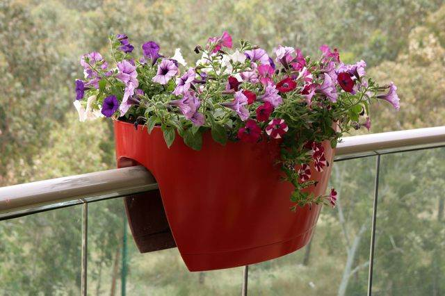 Greenbo-Attractive-Xl-Planter-For-Railings-Fences-Gift-Planters-Polipropilane