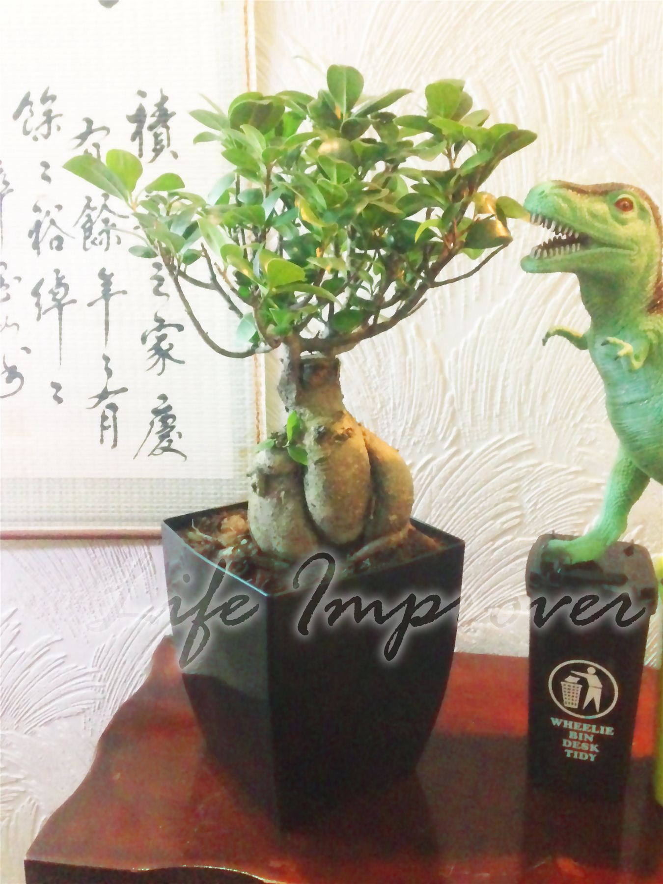 1 bonsai ficus ginseng genseng int rieure arbre en pot esp ces rares usine de jardinage ebay. Black Bedroom Furniture Sets. Home Design Ideas