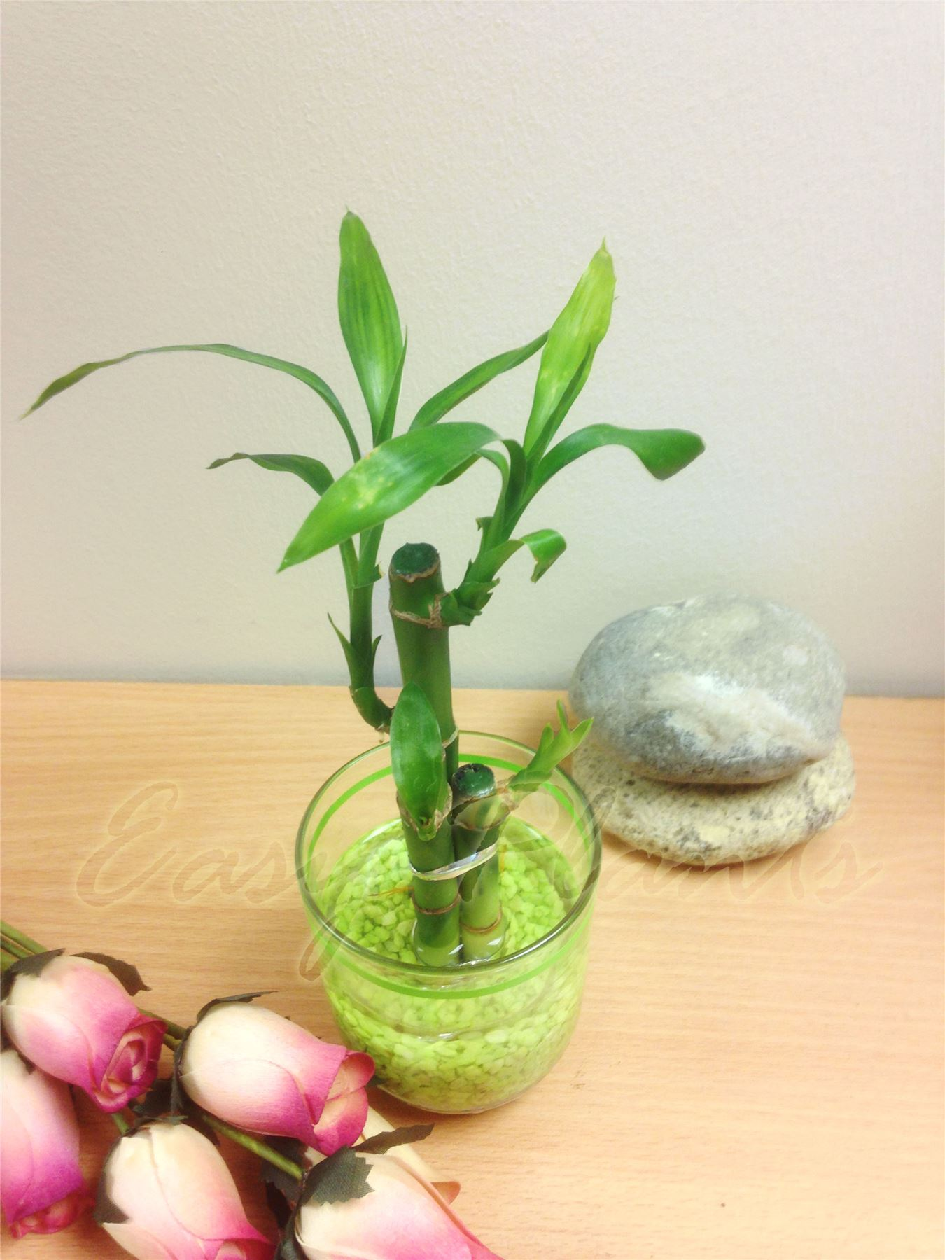 1 pot of lucky bamboo in colourful glass vase house plant - Lucky indoor plants feng shui ...