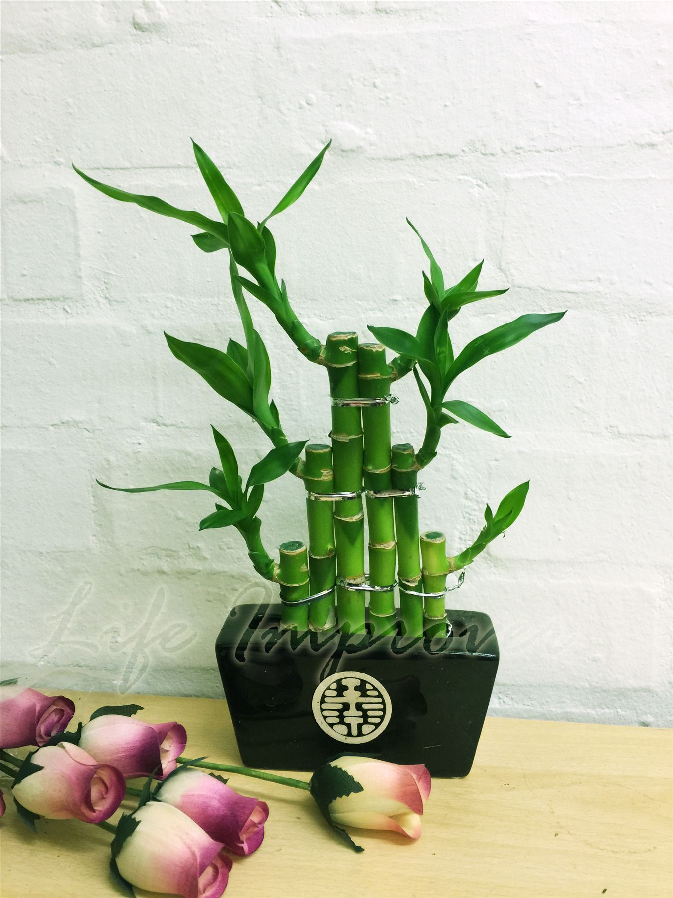 1 lucky bamboo ruban plante evergreen int rieure bonsai en for Plante feng shui