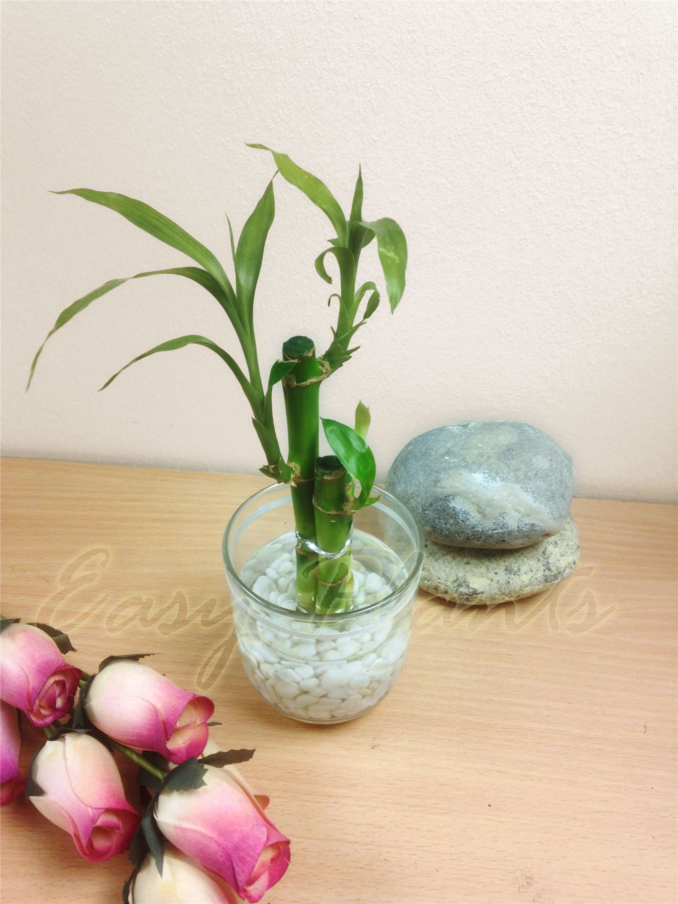 1 pot of lucky bamboo in colourful glass vase house plant feng shui office decor ebay. Black Bedroom Furniture Sets. Home Design Ideas