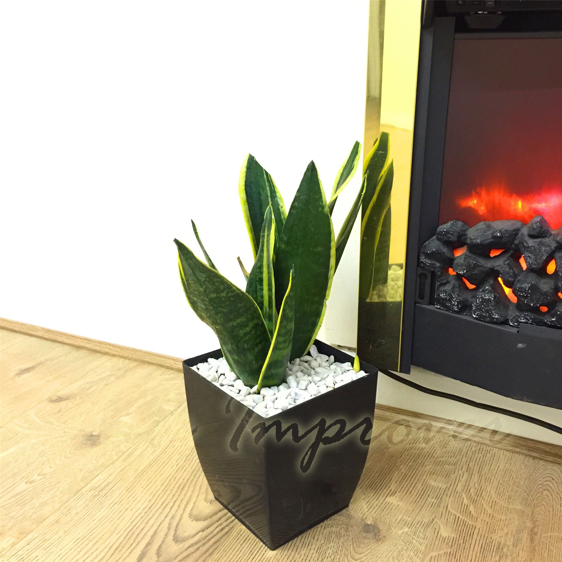 Tabella sempreverde pianta gloss black milano square pot - Pianta sempreverde da giardino ...