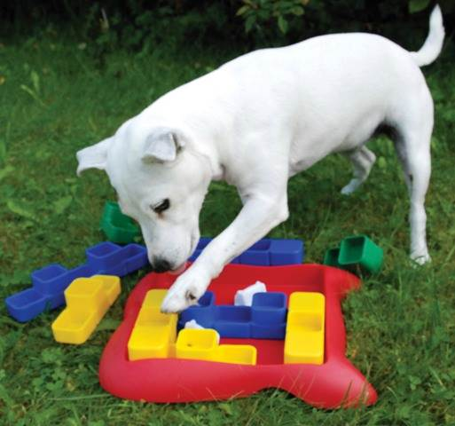 Dog Spinny Toy