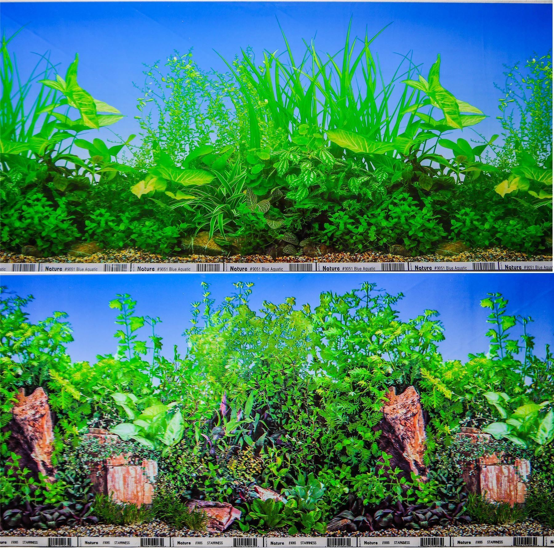 Download Underwater Landscape With Tropical Fish. Coral Reef Scene For Aquarium  Background Or Snorkeling Banner