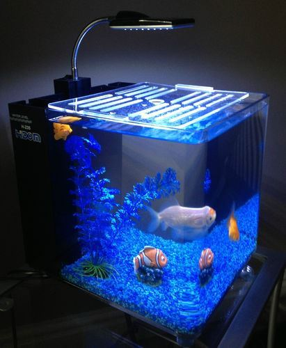 Hidom aquarium fish tank 10 and 15 litre mini office for Desktop fish tank