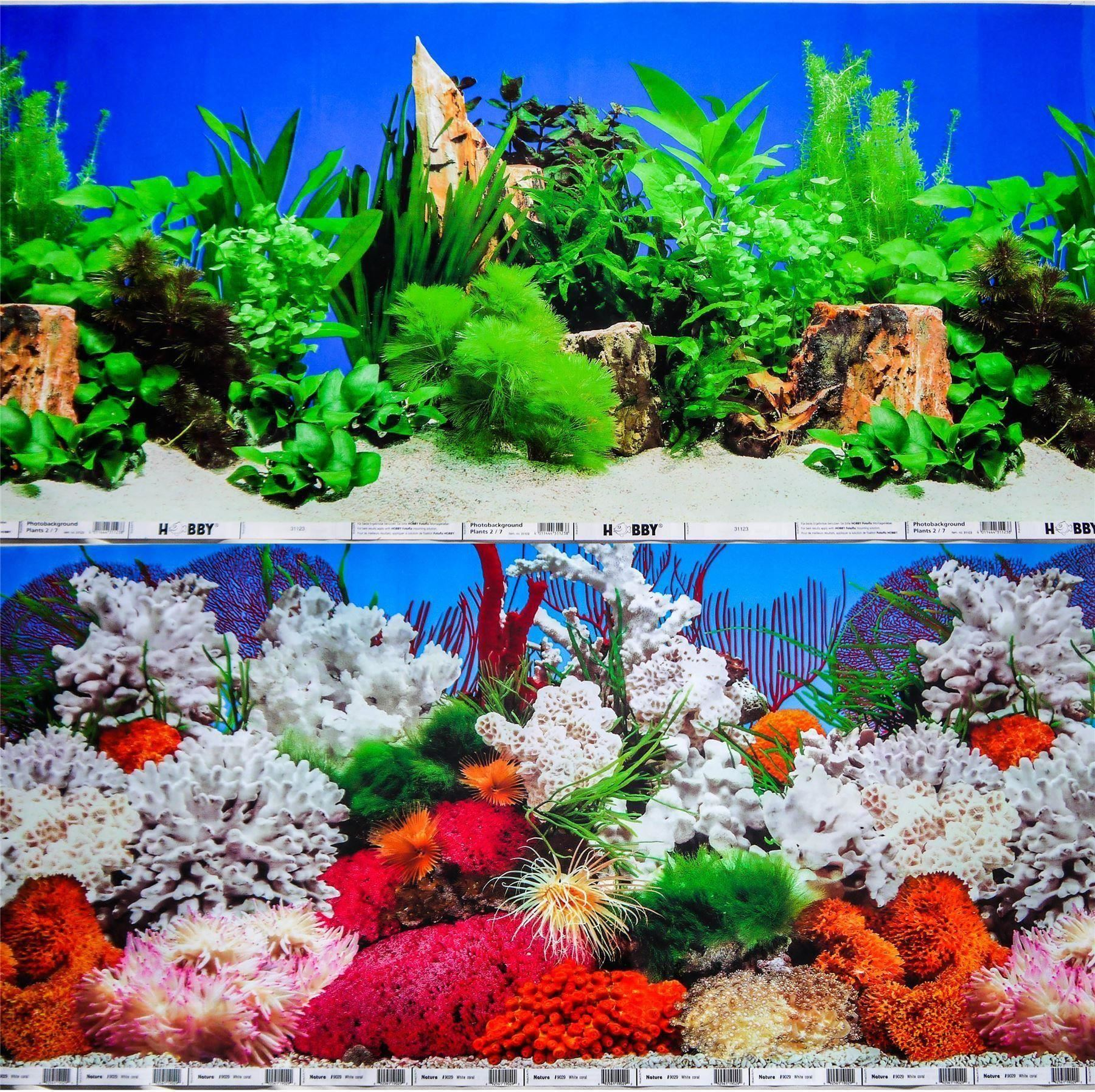 This is a photo of Wild Fish Tank Background Printable